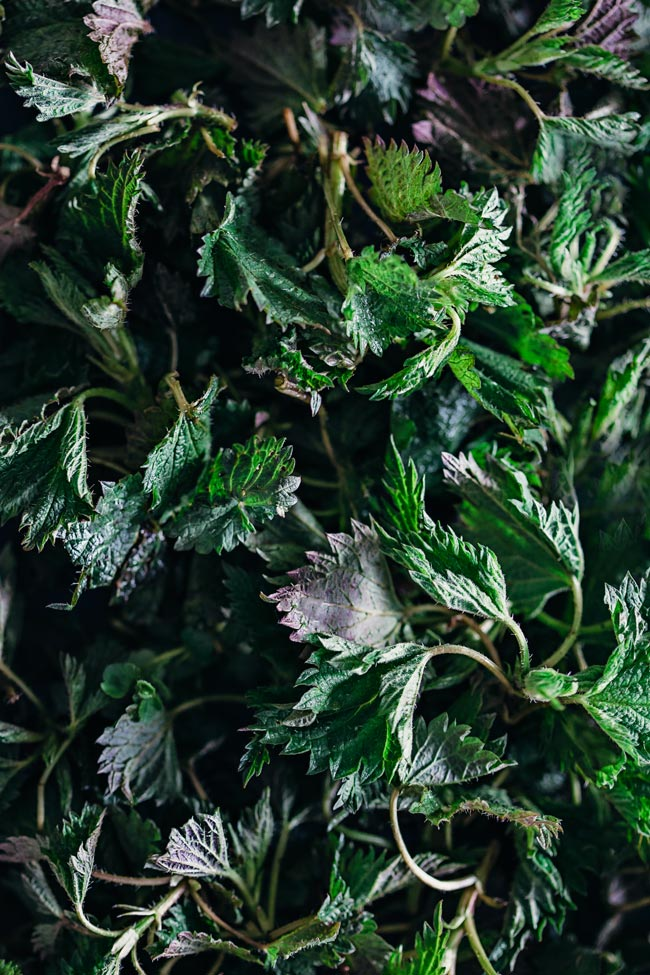 Fresh nettles are loaded with antioxidant and anti-inflammatory nutrients, have diuretic properties and act as a live tonic #vegan #detox | TheAwesomeGreen.com