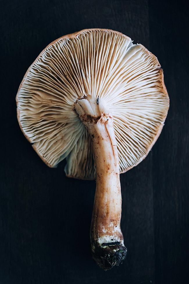 Honey mushroom #wildmushroom #armillaria #fallsoup | TheAwesomeGreen.com